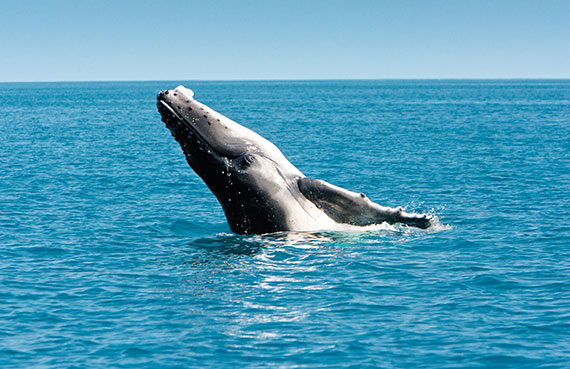Whale Watching Mooloolaba